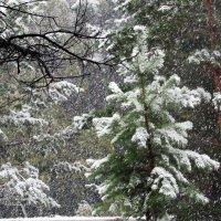 Падал первый снег, густой , пушистый... :: MaOla ***