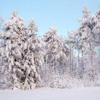 ясный морозный день декабря... :: Сергей