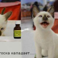 До и после :: Наталия П