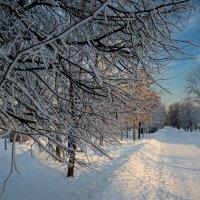 Зима. :: Сергей Басов