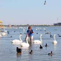 Лебединое озеро в Евпатории (Крым) :: Елена Малкова