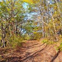 Лесная дорога осенью :: Виктор Шандыбин