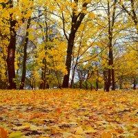 Осень... :: Tatjana