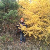 Осень :: Надежда Малинкина