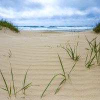 Пляж Анапы. :: Алексей Лейба