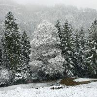 снегопад :: Elena Wymann