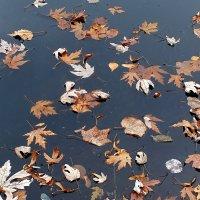 вмерзающие в пруд :: Александр Прокудин