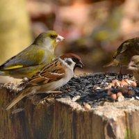 лесная столовая :: linnud