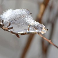 Ледяной ежик :: Nina Streapan