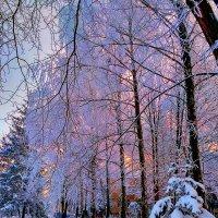 И бела и красна - зимушка зима! :: Клара
