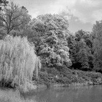Над тихим озером. :: Андрий Майковский