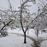 Зимний сад. :: Игорь Карпенко