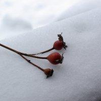 На снегу :: Игорь Шубовичь