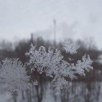 Зима за окном.. :: Викуся Самойлова