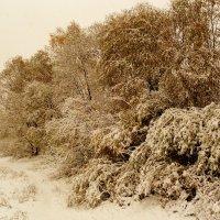 первый снег на зелень в октябре :: Александр Прокудин