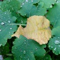 Поздняя осень... :: Тамара (st.tamara)