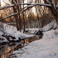 Лесной ручей на закате :: Денис Масленников