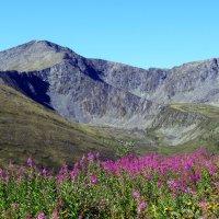 В августе в горах Саянских :: MaOla ***