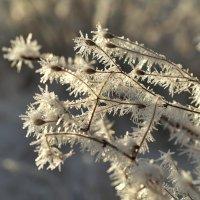 Кудесница зима :: Swetlana V