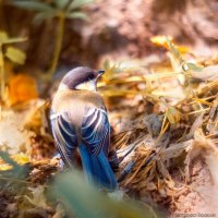 Не велика синичка, а тоже птичка :: Богдан Петренко