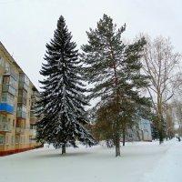Зима в городе. :: Мила Бовкун