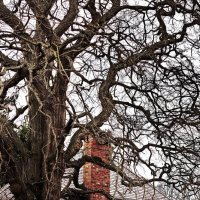 Дерево с трубой :: Alena Nuke