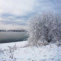 Снег, туман и иней... :: Анатолий Иргл