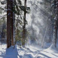 Снег, солнце, ветер. :: Наталья