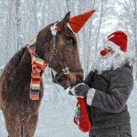 Cчастливые каникулы юной лошадки :: Нина