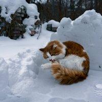 Зима, холода... :: Александр Бойко