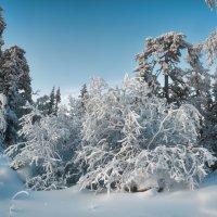 Замороженный лес :: vladimir Bormotov
