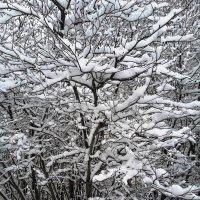 Графика Зимы. :: Марина Харченкова