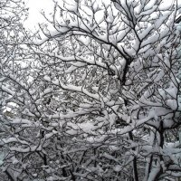 Зимние Узоры. :: Марина Харченкова