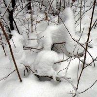 В мире снежных животных. Чудеса природы 2. :: Мила Бовкун