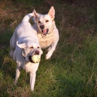 Собаки в игре :: Alena Nuke