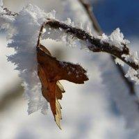 Зимний сюрприз :: Татьяна Смоляниченко