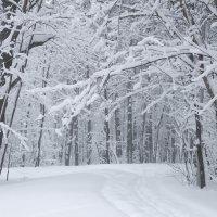 Зимняя лесная сказка :: Сергей Тагиров
