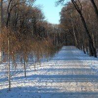 Ноябрьским утром в Тульском парке. :: Инна Щелокова