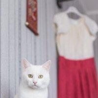 Кот в ожидании свадебного банкета :: Екатерина Гриб