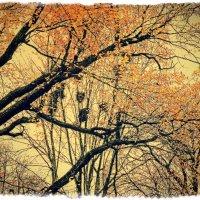 Гнезда птиц :: Андрей Головкин