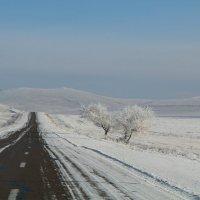 зимняя дорога :: Анна