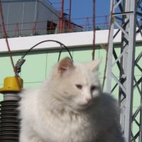 Кошка на электростанции :: Дмитрий Никитин