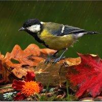 Синица и дождь :: Вячеслав Минаев