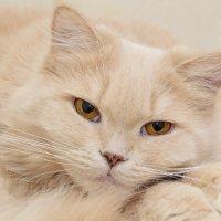 Кошка :: Роман Домнин