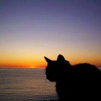 Утомлённая солнцем... :: Taina Fainberg