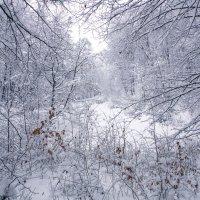 Зимний лес :: Нина Сигаева