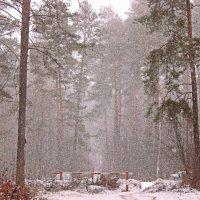 снегопад :: оксана