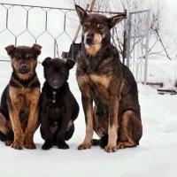 Дачные друзья. Фото на память... :: Александр Резуненко