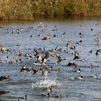 Национальный птичий заповедник  расположен в долине Хула на севере Израиля . :: vasya-starik Старик