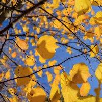Видел осень в Евпатории :: Иваннович *